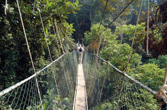 Most Terrific Footbridges In The World
