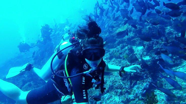 Komodo diving season - diver with coral and fish